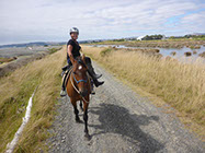 Boutique Horse Treks, Clive, New Zealand. Clearview Winery, Te Awanga